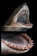 Shark City Ozark BATTLE BRUCE Bust 1/6 JAWS Spielberg Lo Squalo